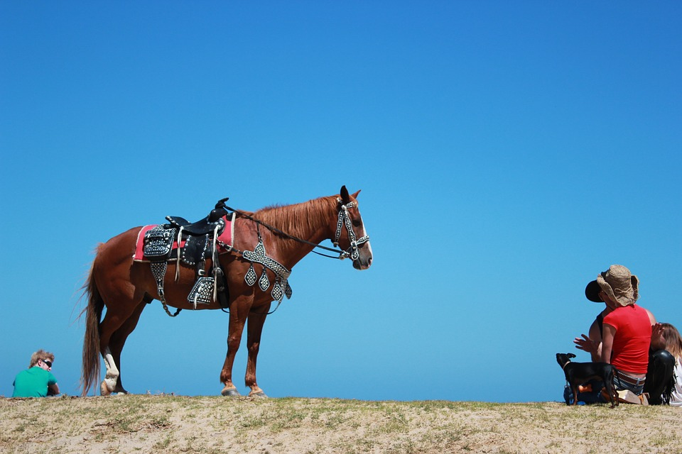 Getting Into Horseback Riding For Your Pleasure