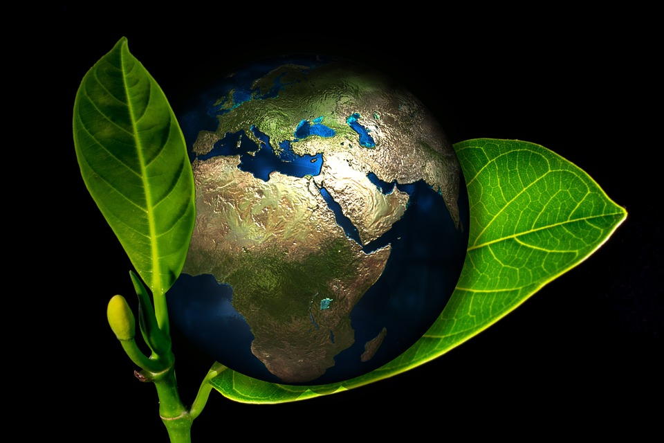Top 5 Eco-friendly Building Materials For Environmental Sustainability