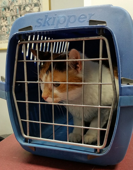 Pet Transport In Sydney: Things To Keep In Mind