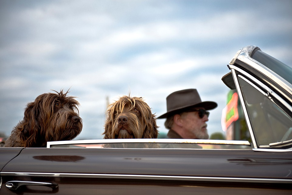 Move Your Pet With Ease Using Dog Transport Services