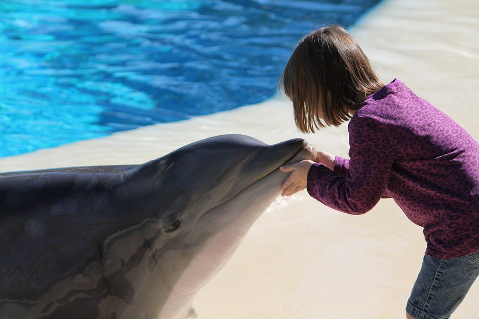 Plan Sunset Dolphin Cruise And Spend A Fun-Filled Evening With Kids