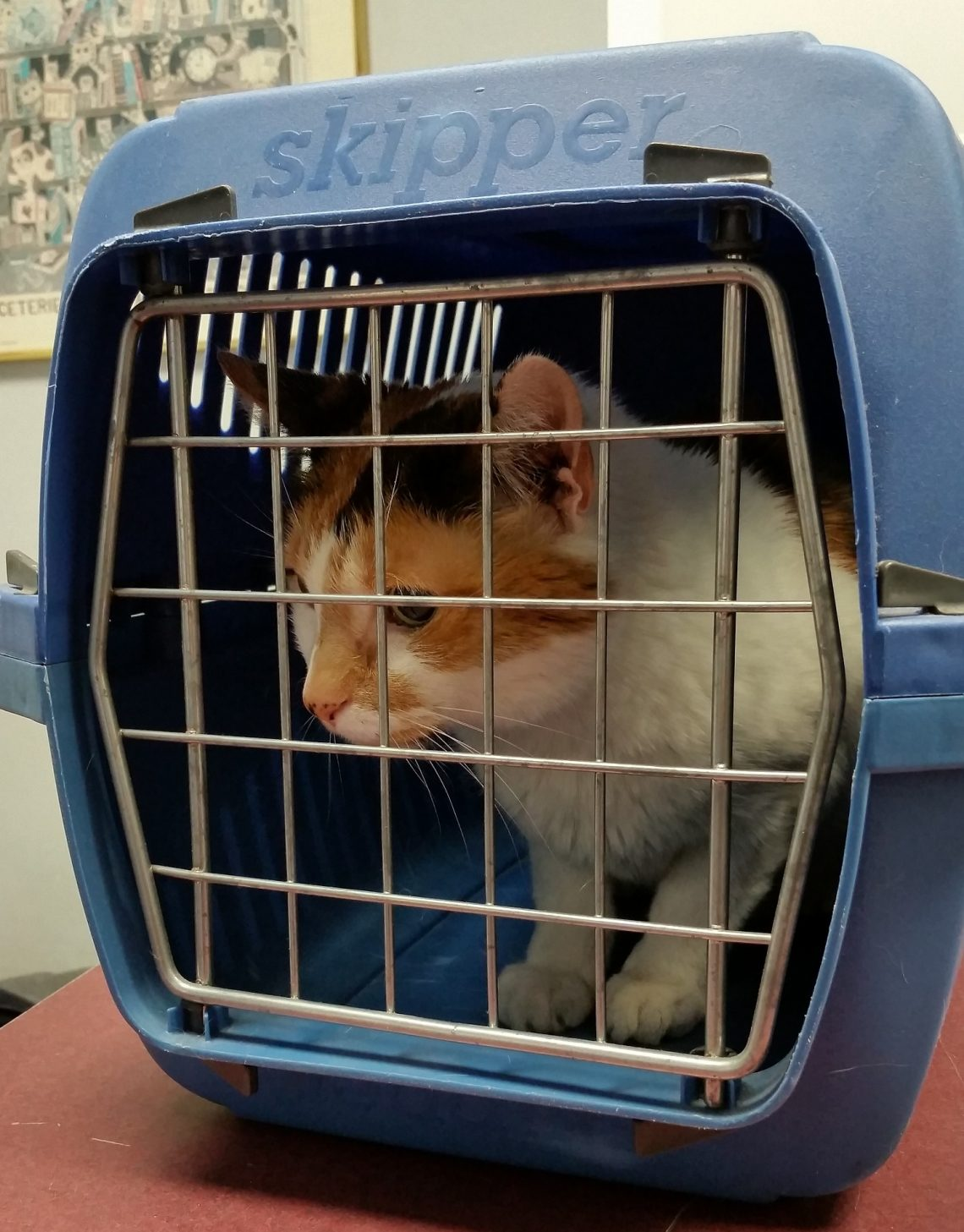 How To Choose The Best Pet Transport Service