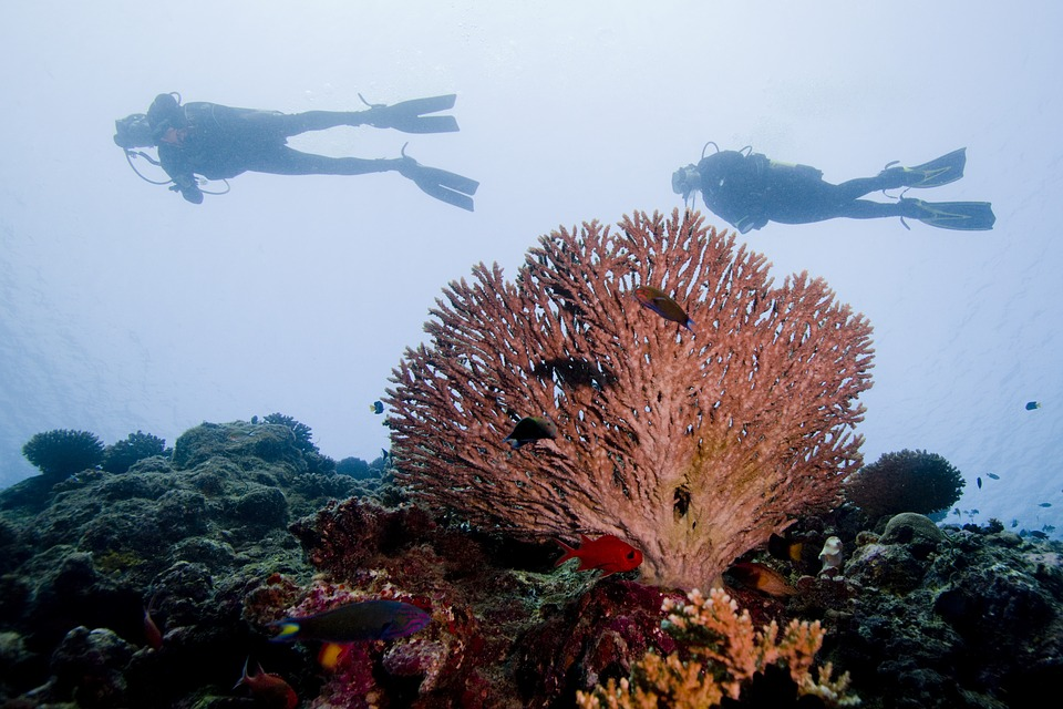 Why Take Dive Instructor Courses?