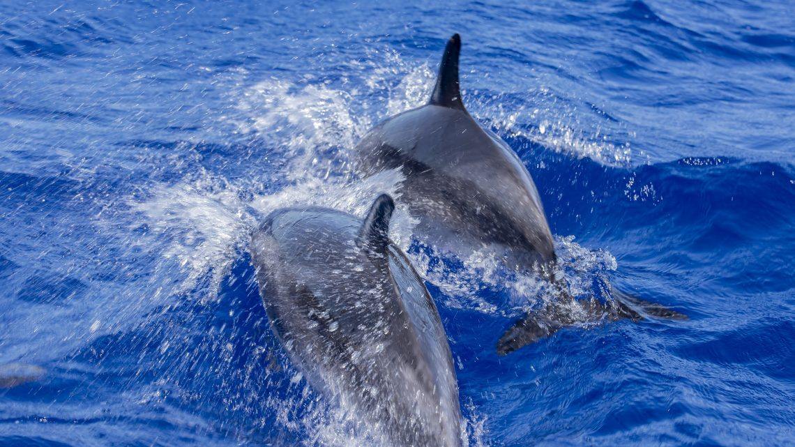Adventures Of Fraser Island Whale Watching Tours