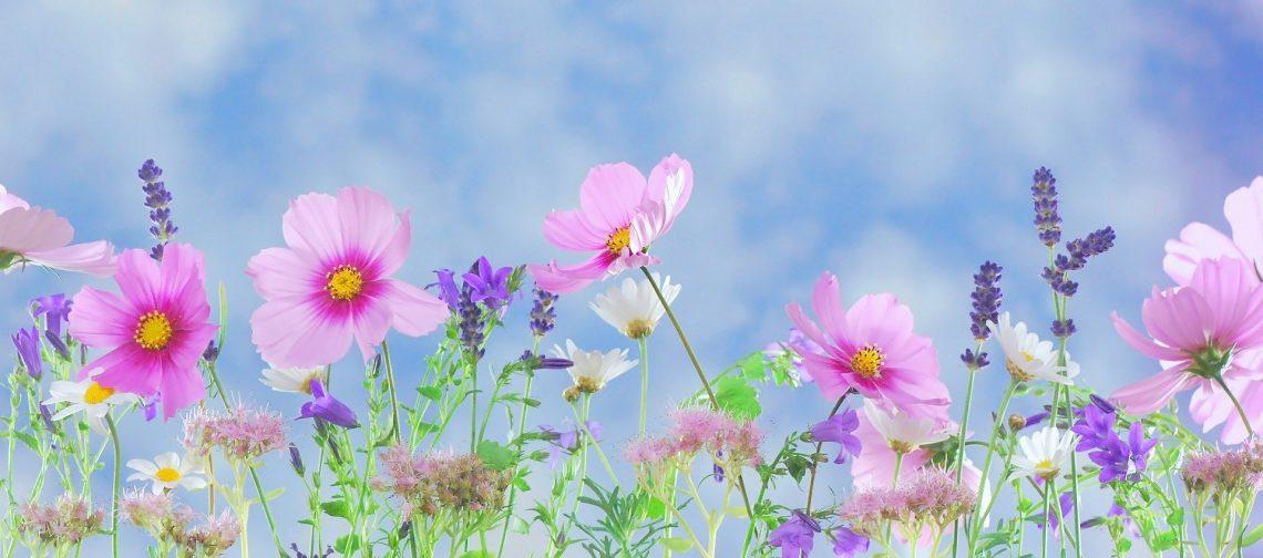 Beginner Guidelines For Growing Flowers In Kalgoorlie