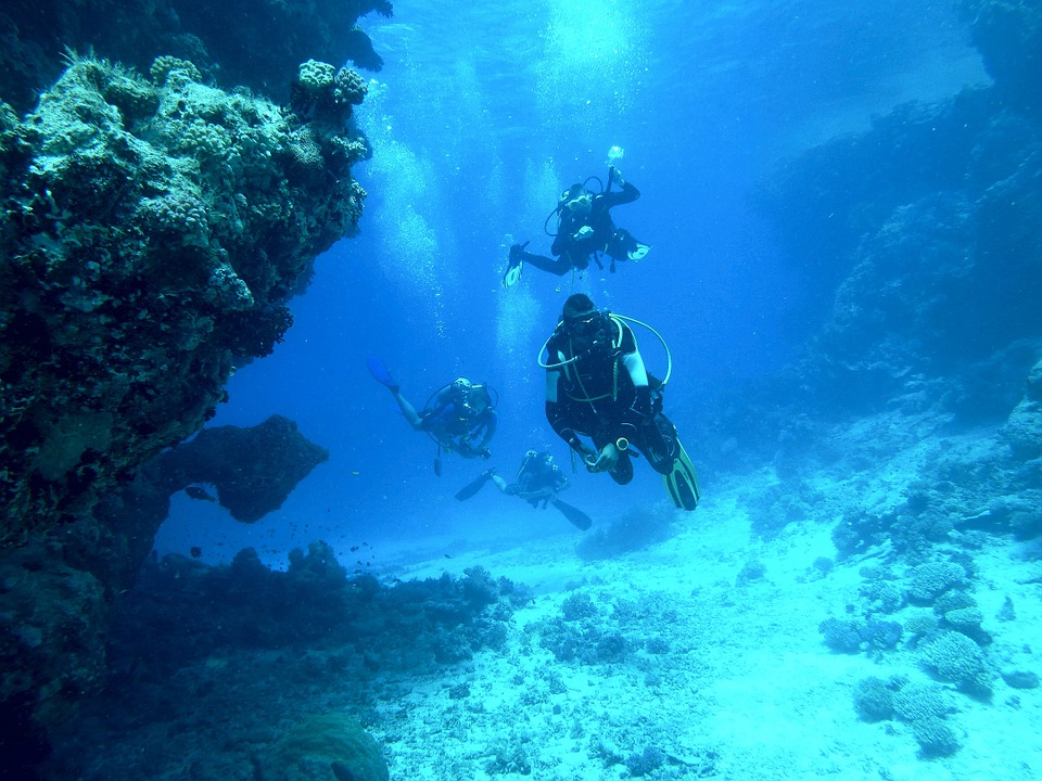 Padi Dive Instructor Certification And Training Program