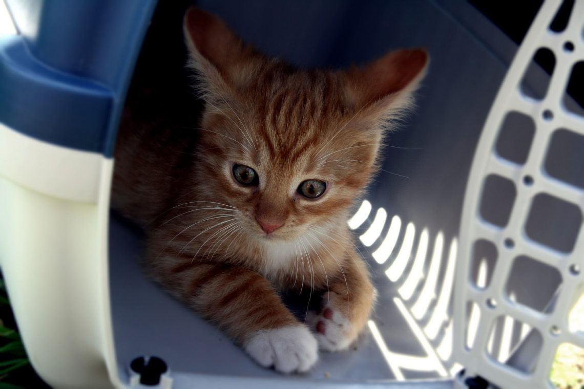 Pet Transport Service – Tips And Advice