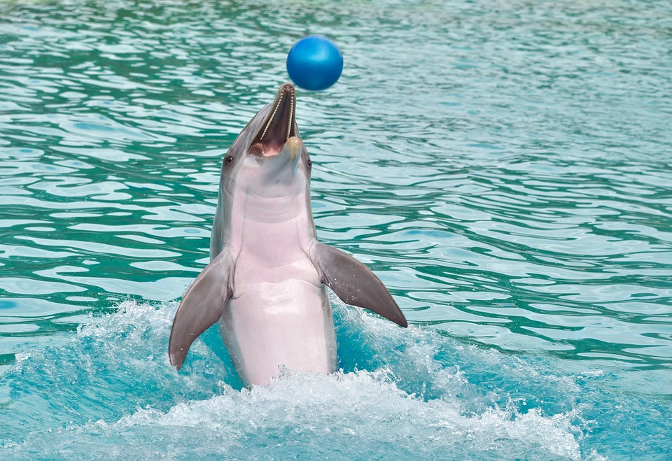 Dolphin Experience Queensland – Top Things To Do