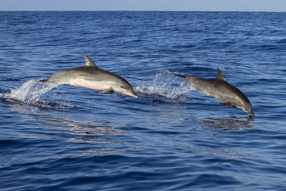 How To Choose The Best Dolphin Cruise