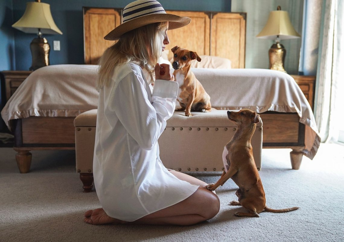 3 Quick And Easy Steps Sure To Curb Dog Mischief