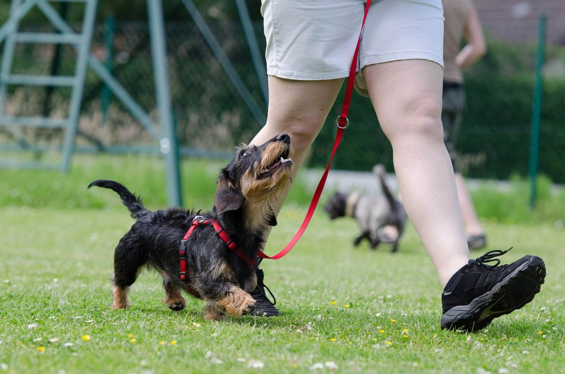 Dog Training At Home For New Pet Parents: 3 Things To Know