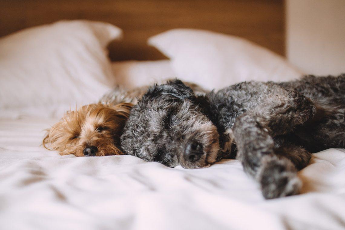 Bring Your Pets Along And Enjoy At Pet Friendly Accommodation Wagga Wagga