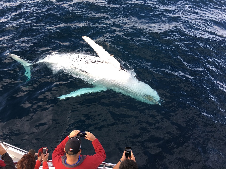 Enjoying Whale Watching Trips On Fraser Island Whale Watching Tours