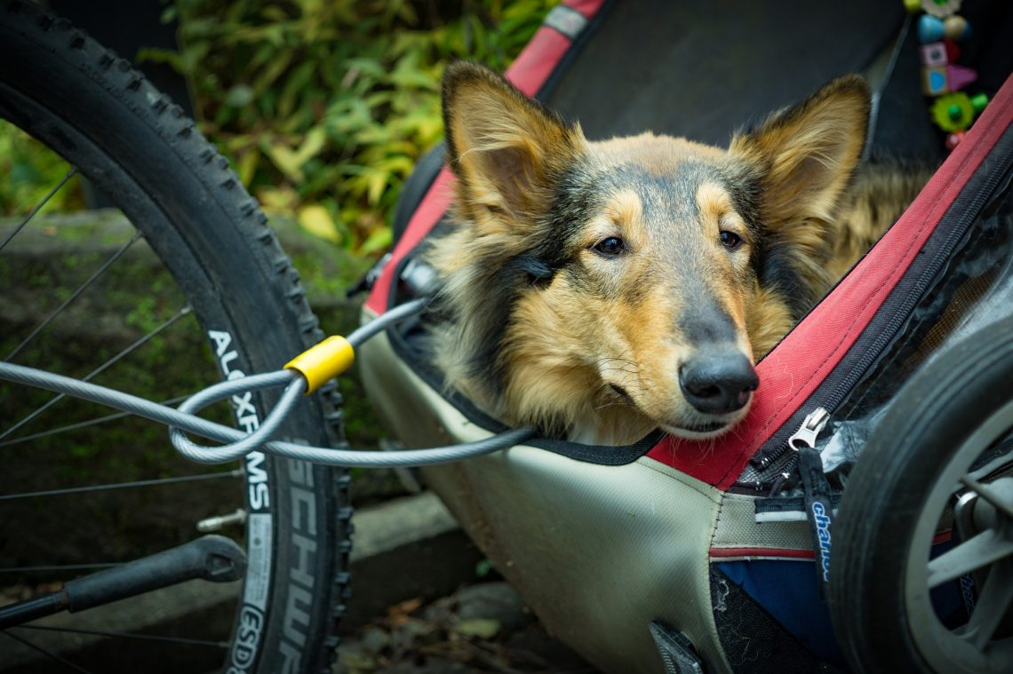 Why You Should Find The Best Dog Transport Company
