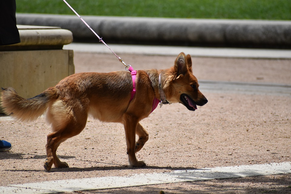How A Qualified Trainer Makes New Dog Training At Home Easy