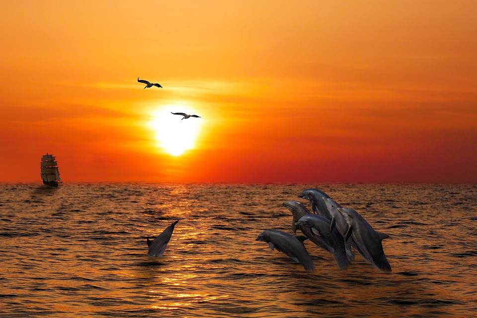 How To Have A Memorable Sunset Dolphin Cruise