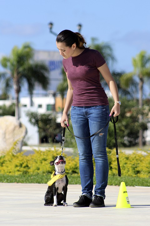 Keep Your Dog Calm And Obedient At Home: Training Tips