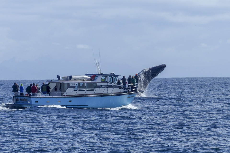 Fraser Island Whale Watching Tours