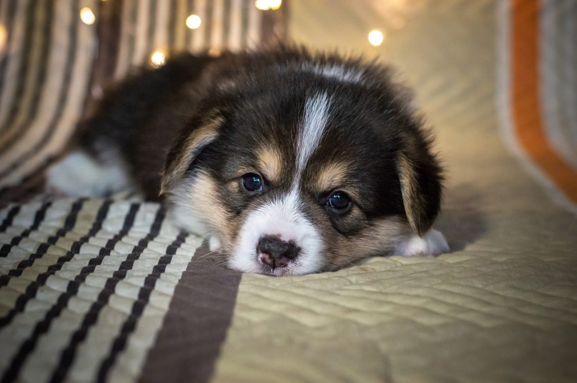 3 Things You Need To Know About Wagga's Pet Friendly Accommodations